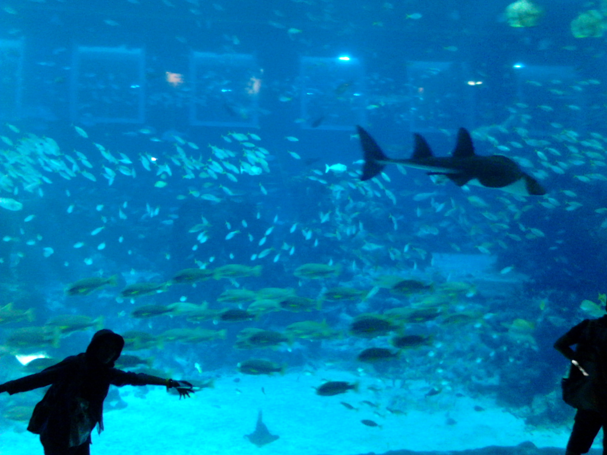 Ocean Gallery - Open Ocean S.E.A Aquarium Singapore